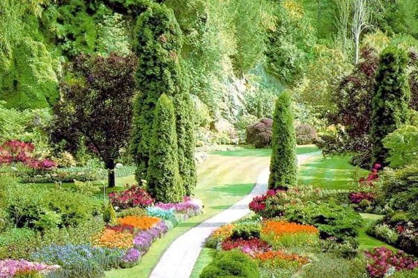 Садовые растения